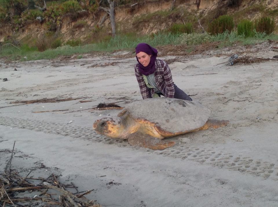Jaynie Gaskin checking tags turtle 15-039